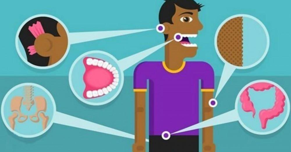 Éstos son los órganos y mecanismos de tu cuerpo que en realidad no ...