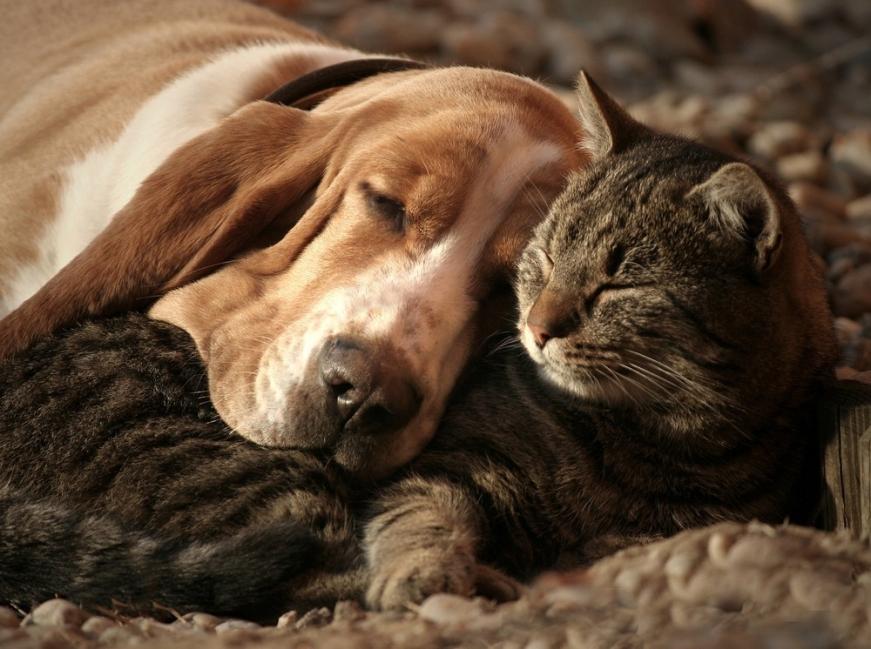 perro y gato se aman