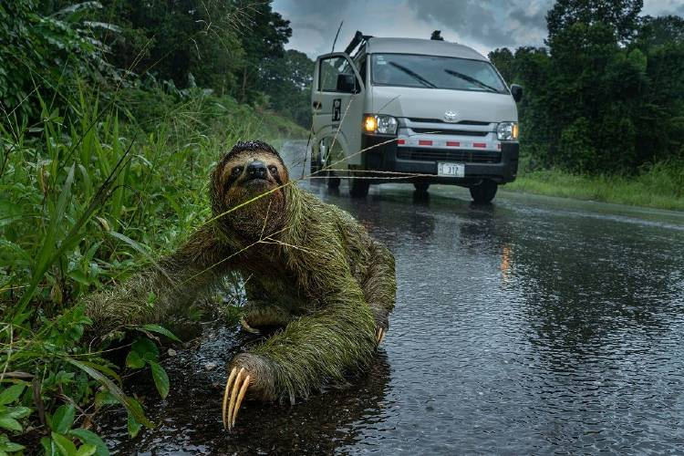 Why did the sloth cross the road Andrew Whitworth