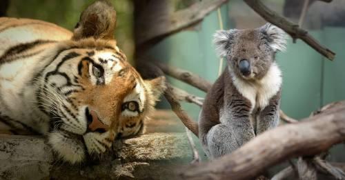 Nos estamos extinguiendo: la población total de vertebrados disminuyó un 60% desde 1970