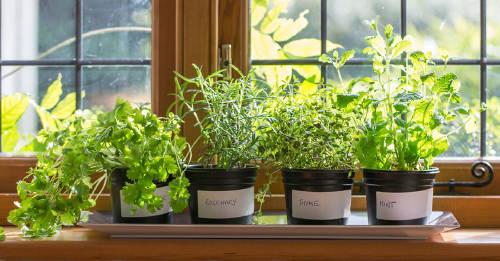 Del huerto a la mesa: disfruta de cultivar tus alimentos en casa