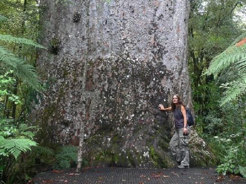 Los 12 árboles más antiguos del mundo