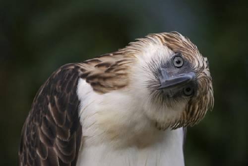 Las 10 aves más extrañas del mundo