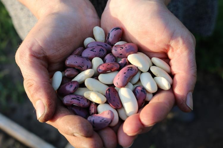 granos enteros legumbres