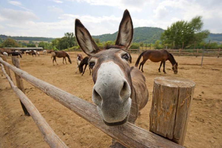 burros 1