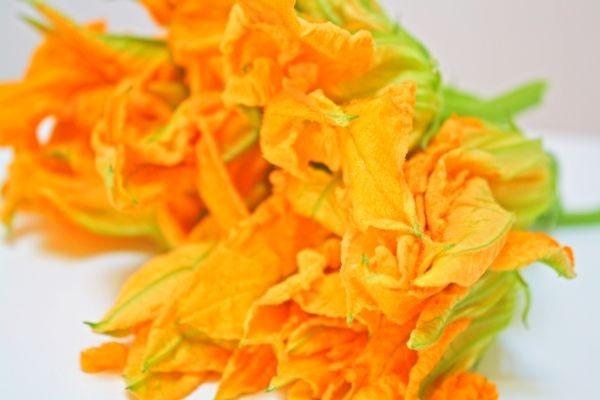 flor de calabazas