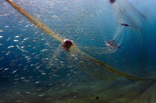 Salvemos el mar: el primer documental que expuso el efecto de la sobrepesca