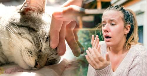 6 consejos para tener mascota cuando tienes alergias