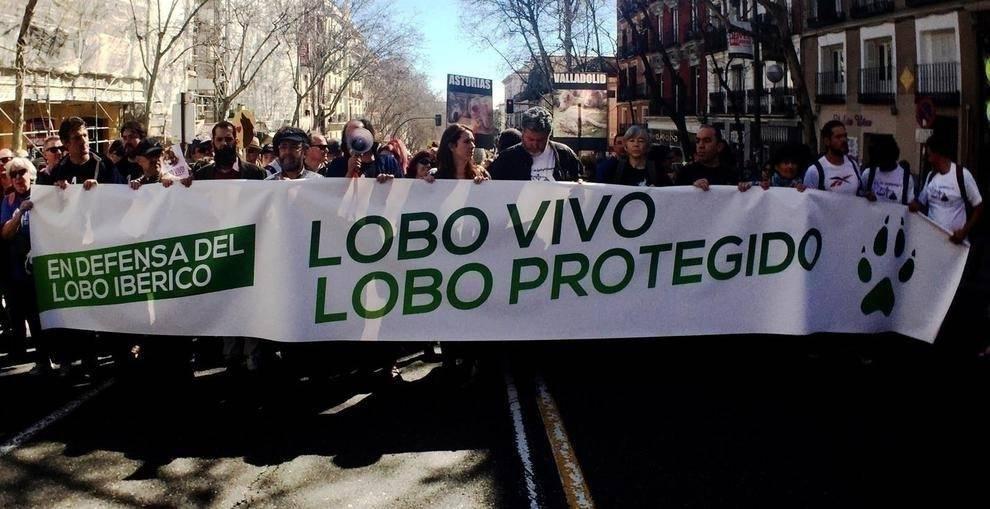 En España, la gente salió a las calles a pedir que dejen de matar a los lobo..