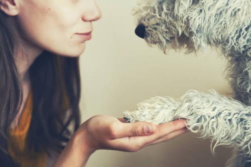 Cómo desinfectar las patas de tu mascota después de su paseo