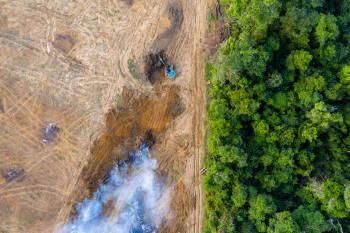 imagen aerea de un bosque deforestado