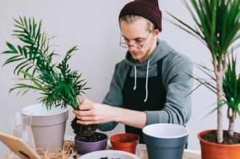 cuidado plantas maceta