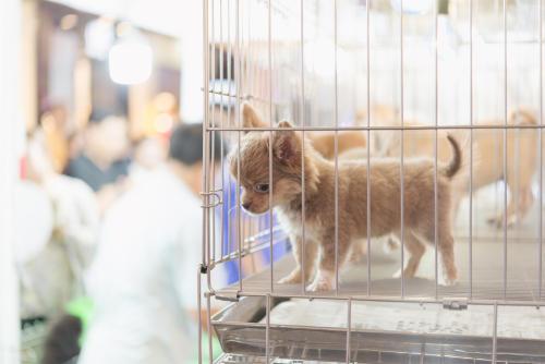 """Nueva York: consideran vedar la venta de mascotas en tiendas y establecer su """"cu"""