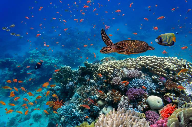 tortugas peces