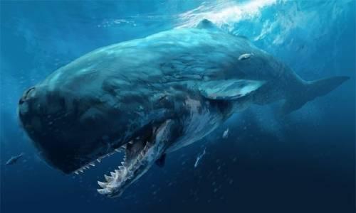 El triste final de un cachalote en España luego de comer 29 kilos de plástico