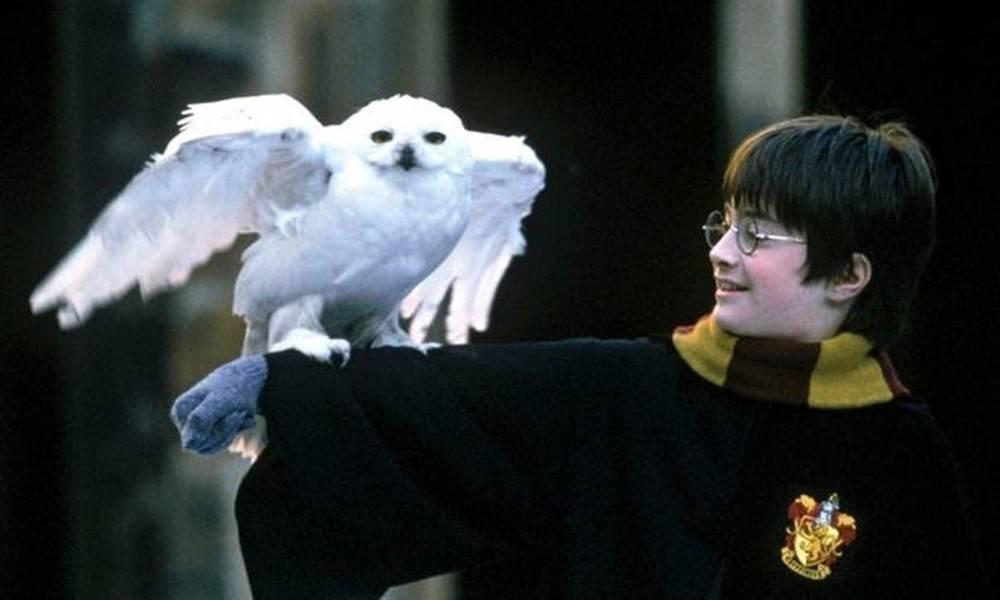 ¿Hay una relación entre Harry Potter y el comercio ilegal de lechuzas? Un es..