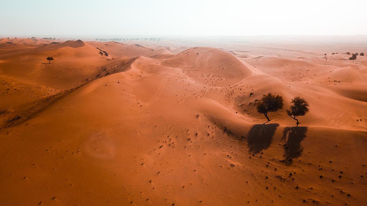 Descubren 1800 millones de árboles ocultos en el Desierto del Sahara