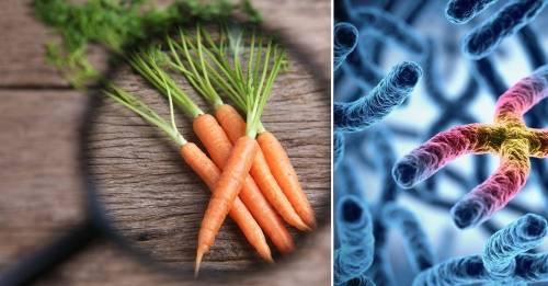 Qué es la dieta genética y cómo inciden nuestros genes en la alimentación
