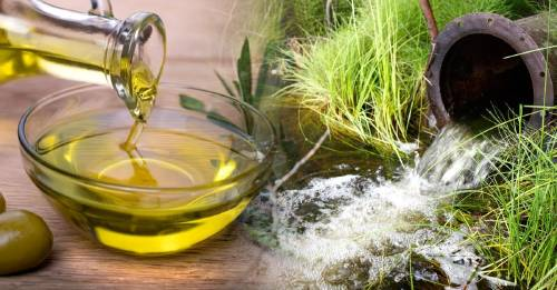Descubren que el aceite de oliva puede limpiar las aguas residuales