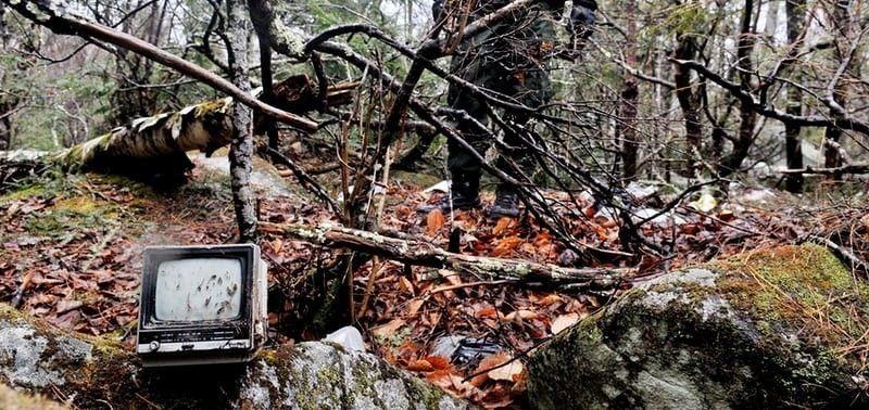 bosque hogar