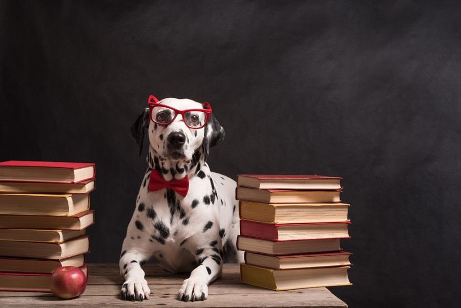 Desarrollan una prueba para descubrir qué tan inteligentes son los perros
