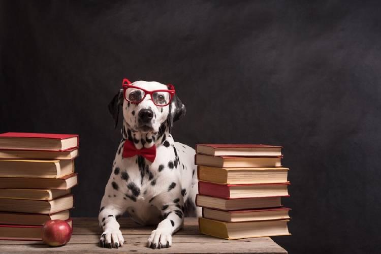 perro inteligente con lentes rodeado de libros