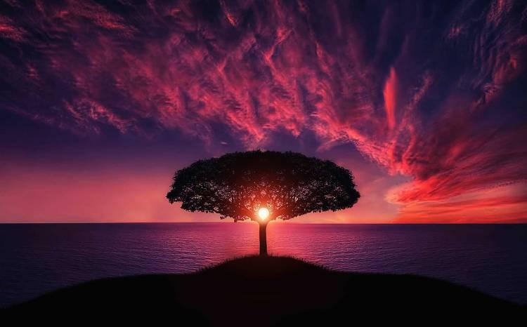 El sol al atardecer se ve a través de un árbol