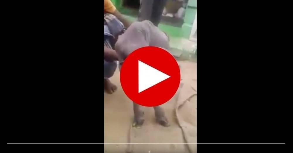 Video: conoce a la cabra mutante que causa temor en india
