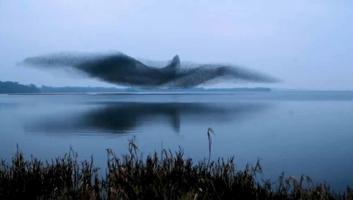 Miles de aves coordinan su vuelo para crear un pájaro gigante