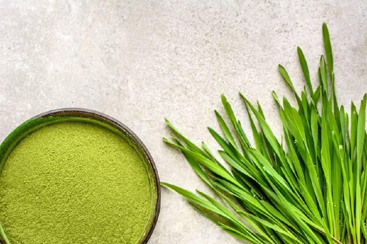 alga y polvo de chlorella