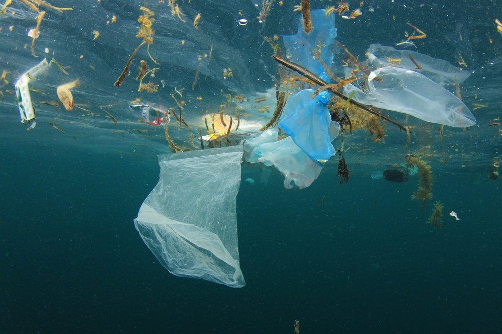 Encontraron 40kg de bolsas plásticas en el estómago de una ballena