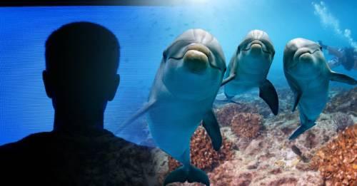 Un estudio revela que los delfines pueden distraerse mirando televisión