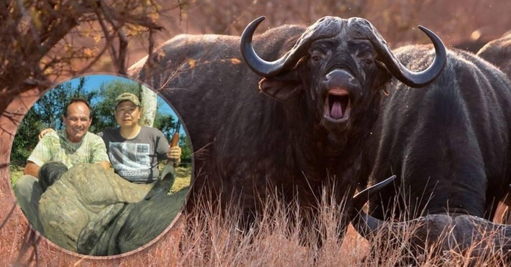 Ellos saben lo que les hacemos: un búfalo mató al cazador que había asesina..