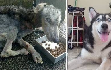 Esta perrita vivía en la calle al borde de la muerte, pero fue adoptada y aho..