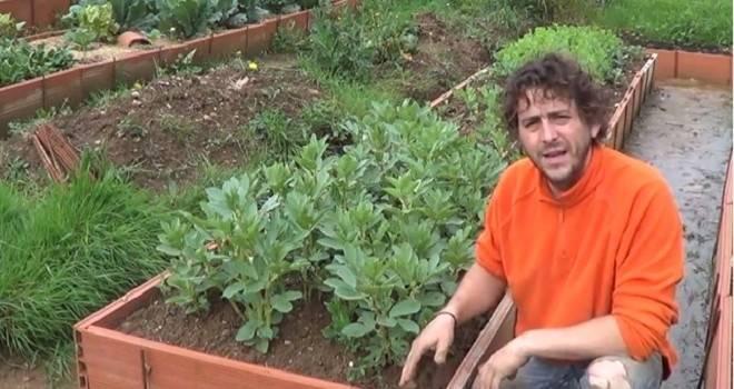 Cómo plantar cebollas en Bancal Con Abono Verde