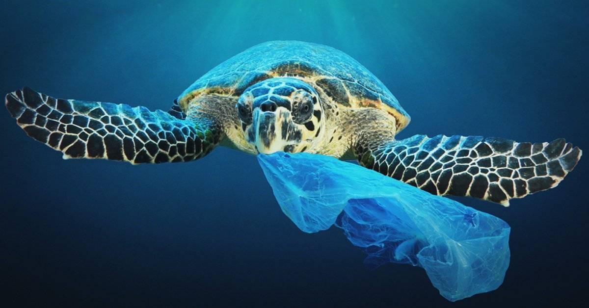 Confirman que las tortugas de todos los mares y océanos tienen microplásticos en el estómago