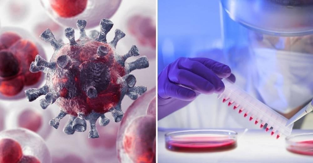 Descubren en el virus de la rabia una posible cura para el cáncer