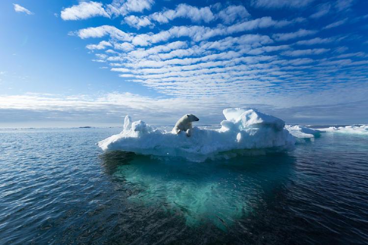 oso polar glaciar