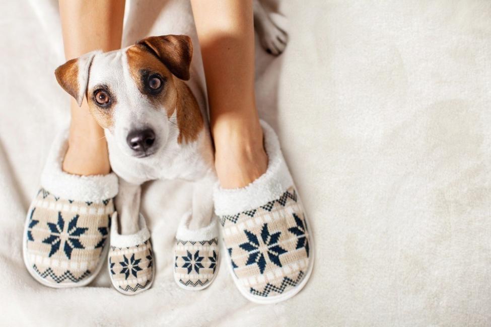 tu perro puede percibir en ti