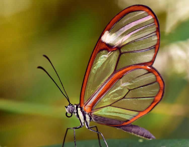 butterfly-3181771_1920