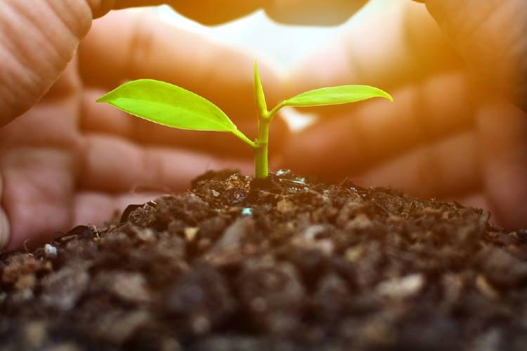 Dos manos protegen el brote de una planta
