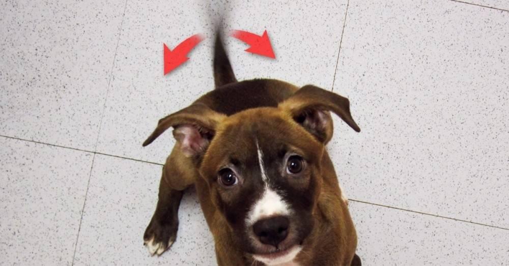 Esta es la razón científica por la que los perros mueven la cola