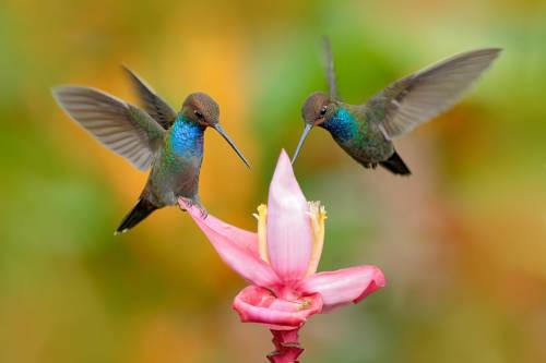¿Sabías que los colibríes tienen la capacidad de ver más colores que los humanos