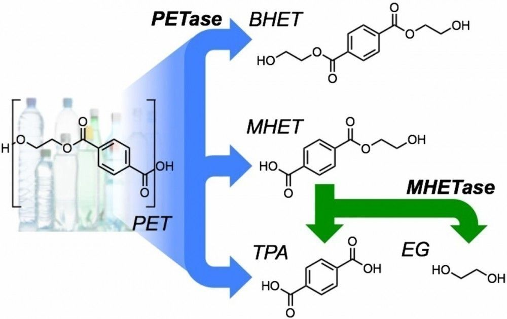 Una enzima recién descubierta que puede digerir PET altamente cristalino
