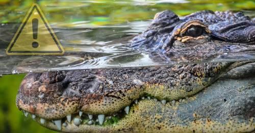 Al menos 300 cocodrilos fueron masacrados en Indonesia