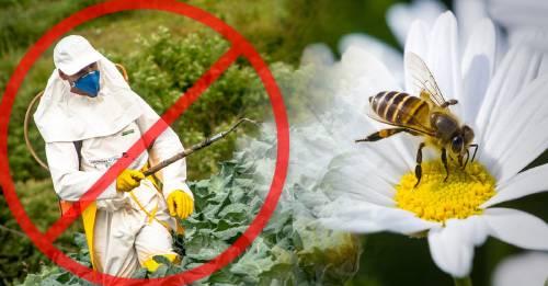 Este país prohibió los plaguicidas relacionados con la muerte de las abejas
