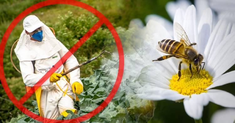 pais-donde-plaguicidas-abejas-prohibidos