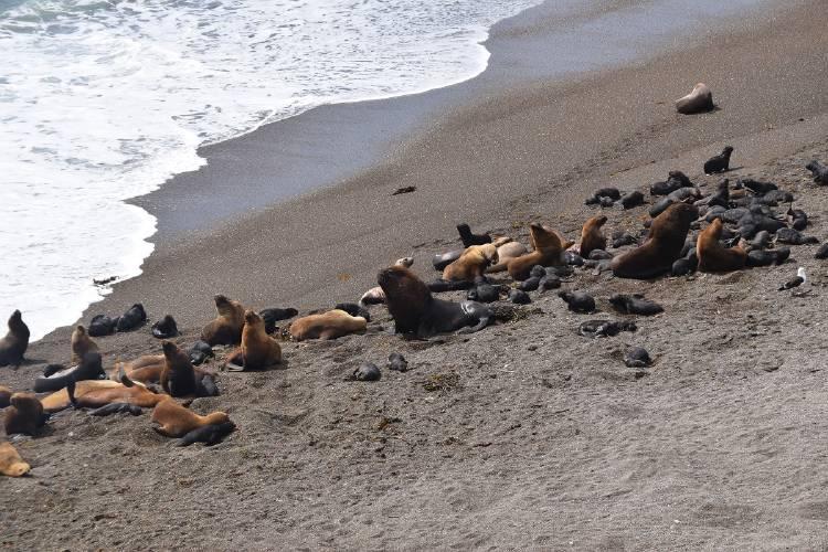 Lobos marinos III