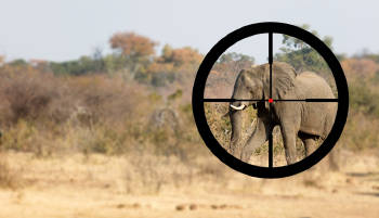 caceria elefantes