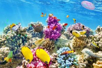 maravillosos y coloridos corales y peces